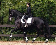Georgian Grande-CH Baron Von Theopolis American Pharoah, American Saddlebred, Triple Crown Winners, Black Shades, Clydesdale, Friesian, Draft Horses, My Horse, Horse Photography