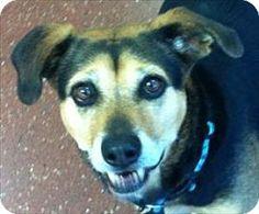 Novato, CA - Beagle Mix. Meet Elizabeth, a dog for adoption. http://www.adoptapet.com/pet/13309340-novato-california-beagle-mix