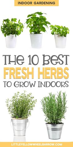 The 10 Best Herbs To Grow Indoors - - Bring the outdoors in by growing fresh herbs inside. Not all herbs appreciate an indoor space, but these are the easiest, best herbs to grow indoors. Herb Garden In Kitchen, Kitchen Herbs, Window Seal Herb Garden, Plants For Kitchen, Vegetable Garden, Garden Plants, Herb Plants, Flower Plants, Cactus Plants