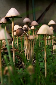 Mushroom: A forest of fungi. Mushroom Art, Mushroom Fungi, Mushroom Images, Mushroom Pictures, Mushroom Hunting, Wild Mushrooms, Stuffed Mushrooms, Poisonous Mushrooms, Foto Nature