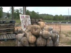 Nancy Today: Fritchy's Gardens Gourds in North Georgia