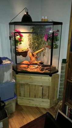 The Best Iguana Cages are Easy to Make - meowlogy Reptile Habitat, Reptile House, Reptile Room, Reptile Cage, Reptile Enclosure, Terrariums Gecko, Terrarium Reptile, Les Reptiles, Reptiles And Amphibians