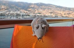Ratte in Madeira.