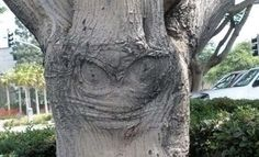 Natural Pareidolia: 13 Faces on Trees - pareidolia, face on tree - Oddee Things With Faces, Tree People, Spooky Trees, Tree Faces, Oak Island, Unique Trees, Wood Tree, Face Photo, Growing Tree