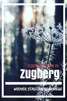 Stadtwanderweg 6: Zugberg, Wien, Natur, Wanderung, Wandern, Österreich, Maurer Wald, Spaziergang Bucket, Happiness, Outdoor, Movies, Movie Posters, Travel, Amazing Places To Visit, Hiking Trails, Travel Report