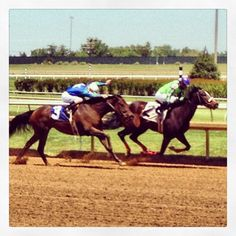 Horses down the stretch. #lonestarpark