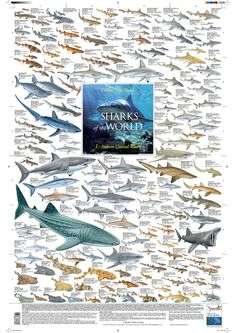 """Sharks of the World - 1: Inshore Coastal Waters"" (Korck Publishing) illustrated by Marc Dando"