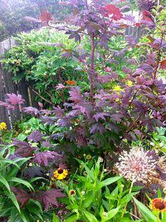 13 Best Plantas De Mi Huerto Images Plants Shrubs Garden Plants