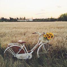 soulmate24.com Photo #bike #sunflowers #country #feild #nature