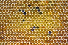 A honey bee's hexagonal honeycombs. Honey Bee Pictures, Honey Bee Facts, Bee Clipart, Small Curtains, Propolis, Backyard Beekeeping, Bee Movie, Bee Pollen, Insects