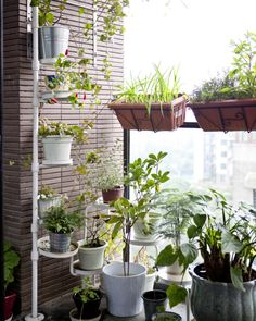 Grow a high-rise oasis and leave the concrete jungle behind