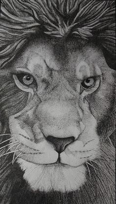 Vibrant nature and portraits, custom work available by LynseyCreations Art Drawings Beautiful, Art Drawings Sketches Simple, Animal Sketches, Stippling Drawing, Realistic Animal Drawings, Black And White Sketches, Dark Ink, Tinta China, Lion Art
