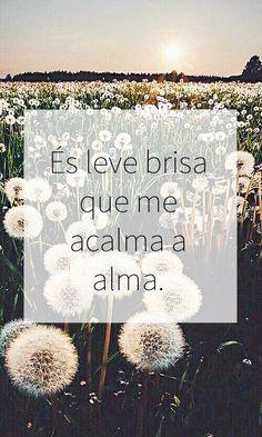 #brisa #calma #amor #amizade #frases #leve #brisa #paz #felicidade #respeito #português