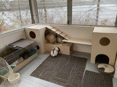Guinea Pig House, Guinea Pig Care, Guinea Pigs, Rabbit Litter, Bunny Rabbit, Rabbit Enclosure, Reptile Enclosure, Rabbit Nail Clippers, Hedgehog Cage