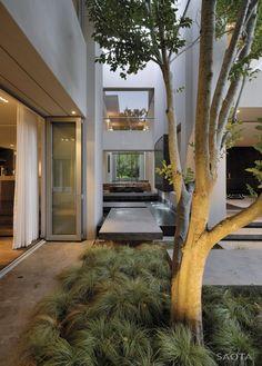 Puerta; árbol