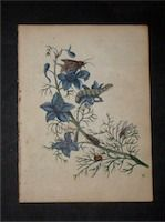 Vasari Fine Art Gallery features Rare Books, Antique Prints and Vintage Posters. Antique Botany Prints and Engravings. Botanical Hand Colored Copperplate Engravings by Maria Sibylla Merian.