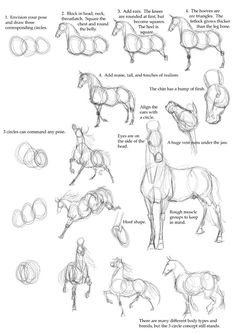 Best Photos of Horse Drawing Tutorial - How to Draw Horse Anatomy, Drawing Horses Step by Step and Basic Horse Head Drawing Drawing Techniques, Drawing Tips, Drawing Reference, Painting & Drawing, Horse Drawing Tutorial, Figure Drawing, Anatomy Reference, Drawing Stuff, Drawing Ideas