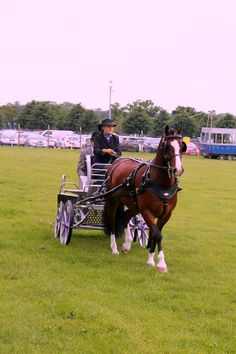The Royal Three Counties Show 2016