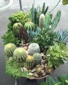 cactus and succulents garden - House Plants - succulents garden outdoor Mini Cactus Garden, Cactus House Plants, Cactus Flower, Garden Plants, Cactus Cactus, Plants Indoor, Succulent Landscaping, Succulent Gardening, Container Gardening
