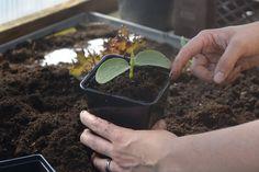 Näringsskola How To Dry Basil, Herbs, Food, Essen, Herb, Meals, Yemek, Eten, Medicinal Plants