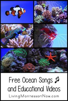 Free ocean songs and educational videos for a variety of ages; perfect for homeschool or classroom for an ocean unit - Living Montessori Now #oceantheme #homeschool #preschool #eled #kindergarten #oceansongs Preschool Songs, Preschool Themes, Montessori Activities, Preschool Lessons, Kids Songs, Montessori Classroom, Preschool Learning, Teaching, Therapy Activities