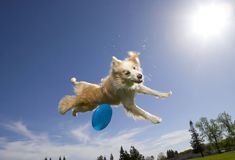 "Frisbee Frisbee offers a classic canine workout. You can play a relaxed game in your own yard or join a formal ""Disc Dog"" team. Participating in competitions may give you and your dog greater motivation to practice regularly. Competitions give you a goal to work toward. They give you motivation to keep exercising, while working on your training and your relationship with your pet."