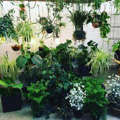 #plantstore @plantaardigmiddelburg