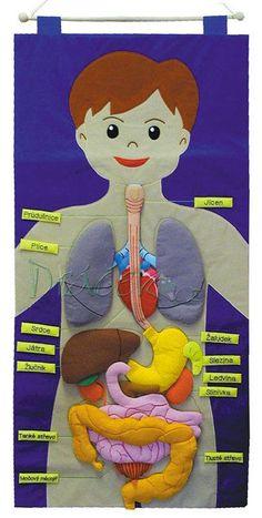 Říkali jsme si, že by se vám těchto 18 pinů mohlo líbit. Science Experiments Kids, Science Education, Science Activities, Stem Projects, Science Projects, School Projects, Material Didático, Human Body Anatomy, Human Body Systems