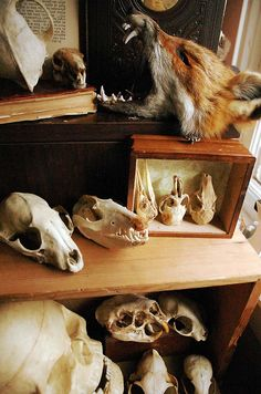 Skull Collection, by Wolf Tea
