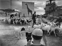 Vanished animals haunt Africa's development in panorama series by Nick Brandt