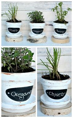 Herbs in painted & labelled terracotta pots