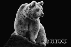 ARTITECT 00011 by Wolf Ademeit