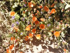 Image: Anza-Borrego Desert State Park