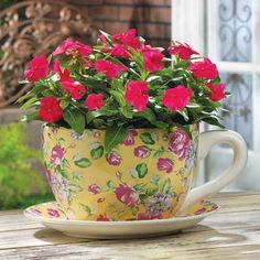 China Rose Teacup Planter