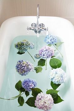 Wow, hydrangeas in the tub. Fabulous!