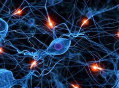 Incapacidade de eliminar estruturas dos neurónios pode explicar atraso mental | #Saúde | Diário Digital