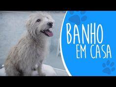 [Aula Prática] Como dar banho em cachorro na sua casa!! [Ju Almeida Pet] - YouTube