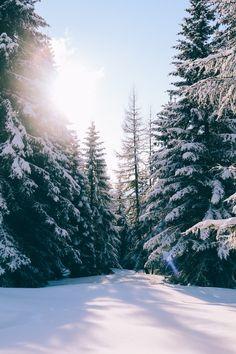 "expressions-of-nature: ""Gerlitzen, Treffen am Ossiacher See, Austria by Else-Marie de Leeuw "" Snow Photography, Landscape Photography, Photography Couples, Photography Portraits, Photography Ideas, Vegetal Concept, Winter Szenen, Winter Trees, Snow Images"