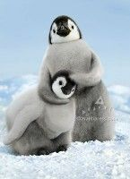Our Emperor Penguin Chicks Birthday card makes for a cool and cuddly way to say Happy Birthday. The inside of this 4 x 6 card readsFeel the love! Cute Baby Animals, Animals And Pets, Funny Animals, Penguin Animals, Funniest Animals, Wild Animals, Beautiful Creatures, Animals Beautiful, Penguin Love