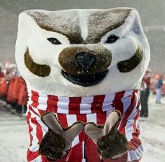 Bucky wants a big W!!