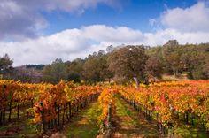 Westbrook Wine Farm, O'Neals, CA
