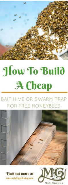 How to build honeybee swarm traps really cheap. Click to find out how to build a bait hive or pin it and save for later