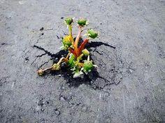 【F】アスファルトから咲くたんぽぽ。アスファルトから顔を出すたんぽぽはとても健気である。同時に力強さや生命力を感じる、。