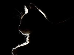 Deciding to Euthanize – Heartbreaking Even When it's the Right Thing to Do -- A veterinarian's personal story. Black Paper Drawing, Pet Vet, Scratchboard, Cat Crafts, Pet Care, Care Care, Cat Life, Weekend Is Over, Cat Art