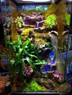Diy Reptile Enclosure 22 - My Reptiles World 2019 Tree Frog Terrarium, Snake Terrarium, Frog Habitat, Reptile Habitat, Reptile Zoo, Reptile Cage, Gecko Vivarium, Dendrobates Terrarium, Crested Gecko Habitat