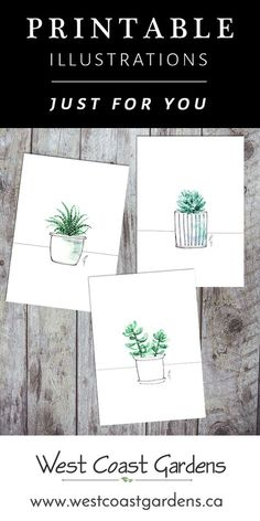 Free set of 3 painted illustrations. These minimalistic succulent watercolour paintings are free for you to download and print, and available in two sizes for easy framing. www.westcoastgardens.ca #free #download #printable #succulent #Paintings #watercolor