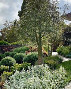 Color Of Life, Dream Garden, Beautiful Gardens, Garden Plants, Exterior Design, Garden Design, Coastal, Around The Worlds, Photo And Video