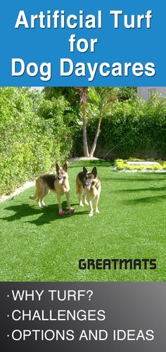 Artificial Turf for Dog Daycares - Artificial Grass Backyard - Therapy Dog Training, Dog Training School, Therapy Dogs, Training Your Dog, Training Collar, Agility Training, Dog Agility, Potty Training, Artificial Grass For Dogs