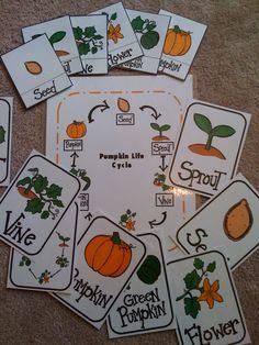 Preschool Printables: Pumpkin Life Cycle