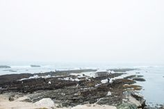 Fitzgerald Marine Reserve is located in Moss Beach, CA, about 40 minutes south of San Francisco on Highway 1, or 15 minutes north of the city of Half Moon Bay.
